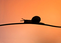 Snail at sunset